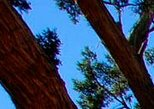 Old Bear Wallow Tour from Sedona PRIVATE Tour