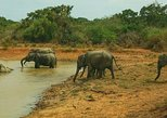 Private Day Tour: Yala National Park Safari Tour from Galle