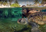 Caribbean - Cayman Islands: West End Activities and Tour in Grand Cayman