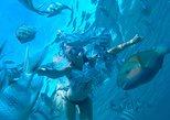 Dolphin Habitat Snorkeling Tour from Hurghada, Makadi or El Gouna