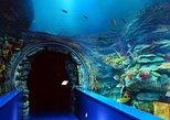 Admission Ticket: Sharjah Aquarium & Maritime Museum