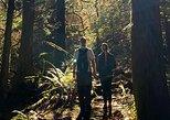 Mystical Rainforest Tours (Forest Bathing & Nature Mysticism)