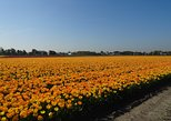 4 hours Private Tour of the flourishing flowerfields by car or minivan