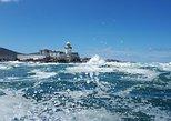 Valentia Harbour Sea Safari & Beginish Island - 2hrs