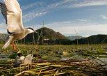 National Bird Reserve Hutovo Blato Photo Safari