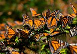 Monarch Butterfly Sanctuary private tour from Mexico city WITH PHOTOGRAPHER