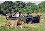 Private Full Day Pillanesberg National Park Safari R199