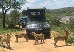 Morning Safari in Kruger National Park from Hazyview (AM KNP)