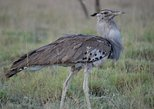 1 Night Nature, Wildlife, Bird and Safari tour to Awash National Park