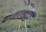 Africa & Mid East - Ethiopia: 1 Night Nature, Wildlife, Bird and Safari tour to Awash National Park