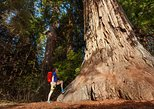 Yosemite National Park & Giant Sequoias 2-Day Tour (no accommodation)