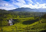 4 Days Tour to Sigiriya,Kandy & Nuawara Eliya from Colombo/Negambo