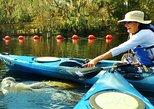 Manatee Tours Blue Springs Orlando