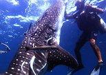 Scuba Diving in Fujairah