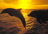 WILD DOLPHINS OBSERVATION TOUR