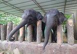 Elephant Sanctuary Tour