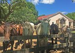 Areco town visit and Gaucho Tour at EL OMBU with English driver/guide- Argentina