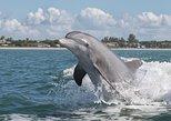 Dolphin Safari & Scenic Tour (St. Augustine)