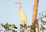 BIRD WATCHING TOUR HUATULCO