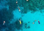 Dolphin & Pelagic Snorkel