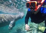 Manatee Swim Tour