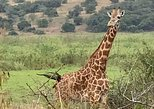 1 Day Akagera National Park Experience