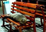 4 Days Tour Galápagos - Santa Cruz Island