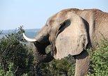 Port Elizabeth Shore Excursion: Safari Tour to Addo Elephant National Park