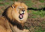 Addo Elephant National Park - Full Day Safari Tours from Port Elizabeth