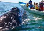 Whale watching Trip to Mirissa (Galle) From Colombo