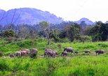 2 Day Trip to Udawalawa Safari & Famous Ella