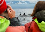 Victoria Zodiac Boat Whale Watching Tour