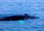 Whale Watching Boat Tour Sri Lanka