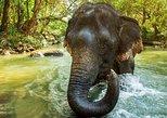 Kerala Hills & Backwater Tour
