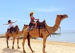 The Best Private Trip With Camel Safari 30 minutes In White Sand Beach