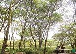 Picnic Experience in Corner Baridi Ngong Hills