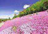 Takinoue's Shibazakura and Kamiyubetsu's Tulip Flower Blossom in Hokkaido!