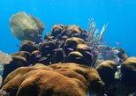 Roatan 3-Stop Reef Snorkel