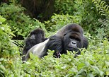 12 Days 11 Nights All Inclusive Uganda Gorilla & Wildlife Safari