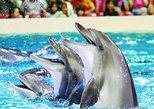 Dubai Dolphinarium VIP Show Tickets with Private Transfers