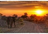 Afternoon Game Drive with Sundowner and Snack