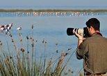 Bird watching| From Faro : Walking in Ria Formosa- Quinta do Marim