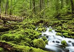 USA - Washington: 1-Day Olympic National Park Tour from Seattle, WA