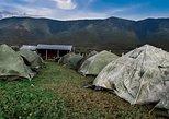 Camping at the foot of Ngong Hills