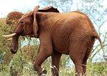 3-Day Mombasa to Tsavo West Safari