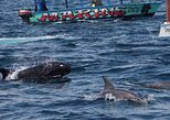 DOLPHINS AND SNORKELING TOURS IN WATAMU