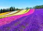 Hokkaido Highlights of Flower Blossom, Asahiyama Zoo& Ninguru Terrace