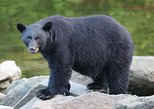 Private 2.5 hour Potlatch Park, City & Wildlife Tour
