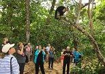 Rain Forest Nature Walk Expedition and Banana Plantation Limon Shore Excursion