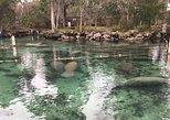 Crystal River Florida Manatee Swim Tour